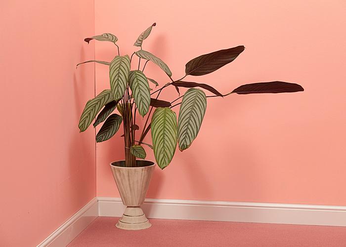 pink inspiration for interior design